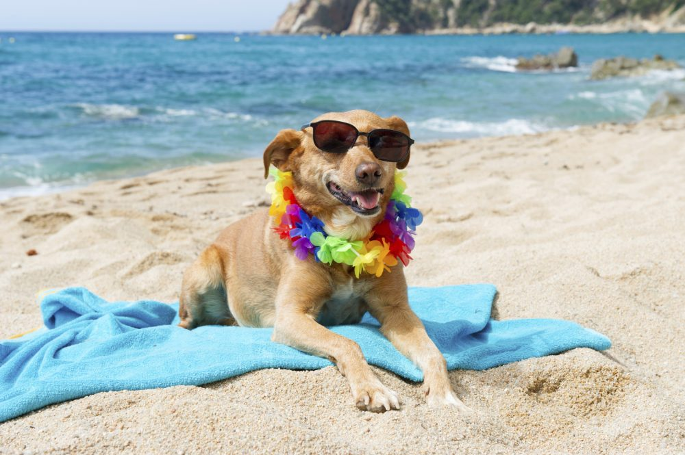 Cool dog on the beach for managing your brand Brand Kahuna St Charles Web Design